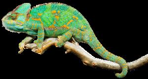 Reptiles and Exploring